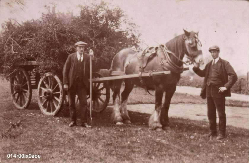 J. Oswald ( Ozzy) Stead and farm worker Jack Creaser
